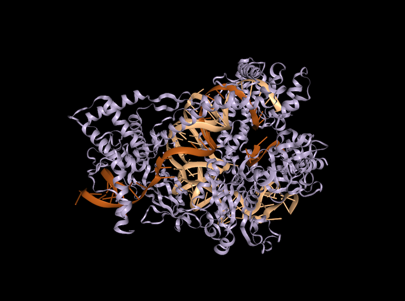 Structure of Cas12b bound to RNA