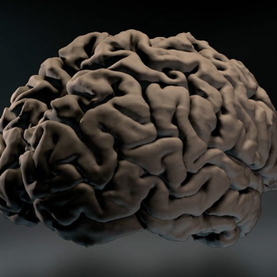 Illustration of the human brain