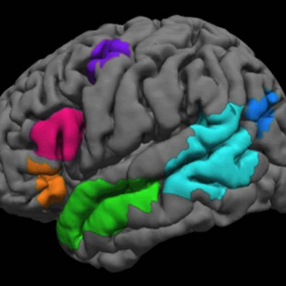 Language regions of the brain