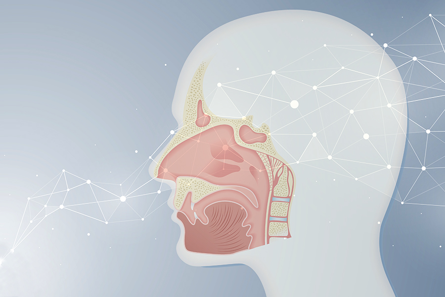 abstract neural network with human olfactory system